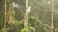 Interior of tropical rainforest on a misty day Stock Footage