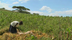 A woman works on a farm in Africa. Stock Footage