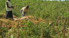 Two women work in the fields on a farm in Africa. Stock Footage