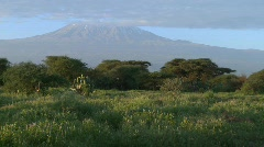 A beautiful morning shot of Mt. Kilimanjaro in Tanzania, East Africa. Stock Footage