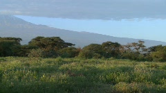 A beautiful panning morning shot of Mt. Kilimanjaro in Tanzania, East Africa. Stock Footage