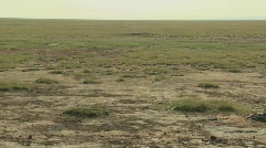 The skeleton of a dead animal lies in the desert as an example of life and death Stock Footage