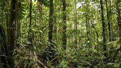 Interior of tropical rainforest pan Stock Footage