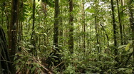 Stock Video Footage of Interior of tropical rainforest pan