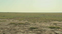 Pan across parched desert to the skeleton of a dead animal lies in the desert as - stock footage