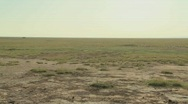 Stock Video Footage of Pan across parched desert to the skeleton of a dead animal lies in the desert as