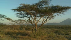 Mt. Meru in the distance, across the Tanzania savannah. Stock Footage