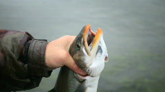 Fisherman catching a fish Stock Footage