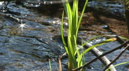 Stock Video Footage of Green grass, sun reflexion in water