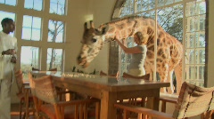 Giraffes stick their heads into the windows of an old mansion in Africa and eat Stock Footage