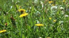 Wildflowers. Stock Footage