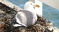 Pigeon's Nest HD Footage
