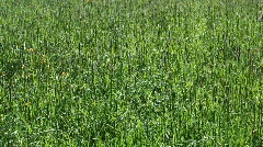 Meadow grass. Stock Footage
