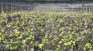Vineyard in the Spring Stock Footage