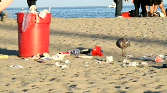 Beach Litter Stock Footage