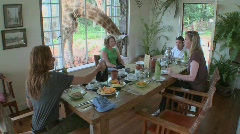 A giraffe interrupts a breakfast at a house in Africa. - stock footage