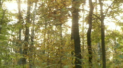 Sun through trees 3 Stock Footage