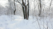 Stock Video Footage of Winter footpath