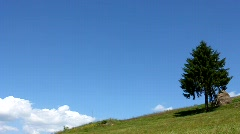 Lonely tree - stock footage