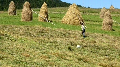 Woman ted the hay Stock Footage