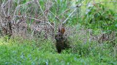 Bunny Eats and Runs Stock Footage