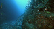 Stock Video Footage of Deep Reef Wall