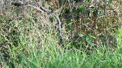 Black snake in the grass  Stock Footage