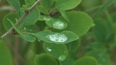 Dew drop. Stock Footage