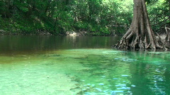 Pot Spring Florida 2 Stock Footage