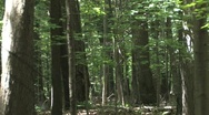 Deep in the Woods Stock Footage