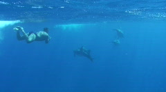 Four Bottlenose dolphins (tursiops truncatus) - Underwater view Stock Footage