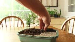 Bonsai Tree Styling Stock Footage
