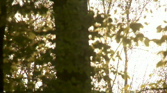 Sun through trees 1 Stock Footage