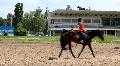 Equestrian sport Footage
