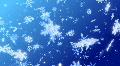 Snow Flake DL2 HD Footage