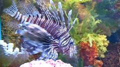 Big fish Stock Footage