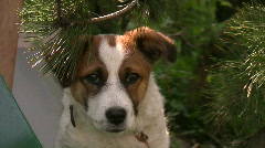 Dog sitting on a tree 3 Stock Footage