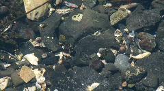 Tide pool  Stock Footage