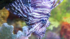 Striped fish Stock Footage