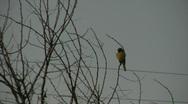 Bird Stock Footage