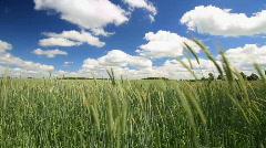 Wheat field3 Stock Footage