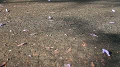 Purple Peddles on Street 2 Stock Footage