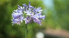 Purple Flower Close 2 Stock Footage