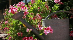 Pink White Flowers w Water Pail - stock footage