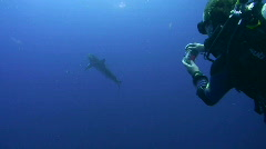 Silky Shark close to scuba divers Stock Footage