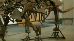 Stock Video Footage of dinosaur skeleton pan P HD 7238