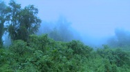 Stock Video Footage of Fog rolls in over the jungle and rainforest.