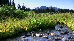 Garibaldi meadow Stock Footage