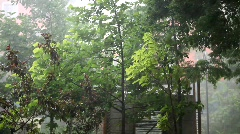 Trees in the storm Stock Footage
