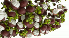 Mangosteen flow with slow motion Stock Footage
